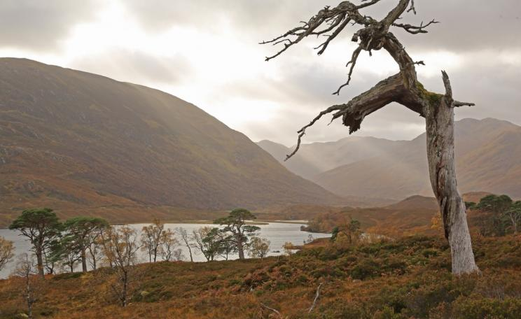 <p>There is both melancholy and beauty in this photograph of a dead Scots pine, or snag, silhouetted against shafts of sunlight over Gleann na Ciche and Loch Affric © Alan Watson Featherstone</p>