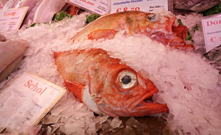 A red snapper, whose trade may be underestimated by more than 70%, on ice at a fish market