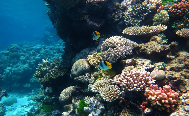 The Great Barrier Reef is the world's largest coral reef system stretching for over 2,300 kilometres