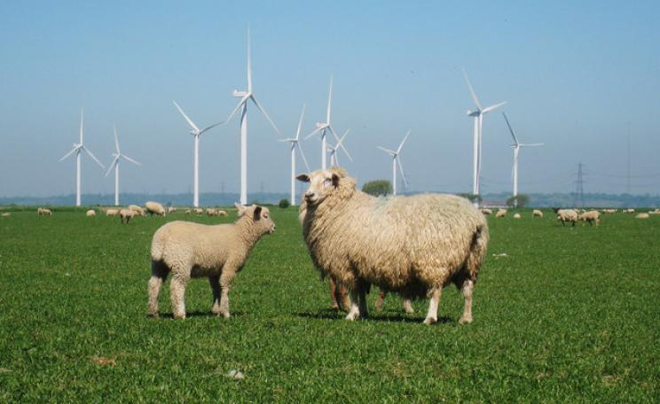 A sheep and lamb stand in front of Little Cheyne Court wind farm in Essex.