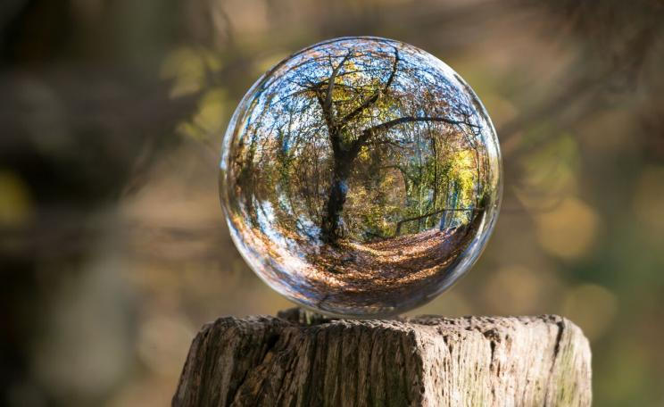 You don't need a crystal ball to know tree planting has significant benefits.