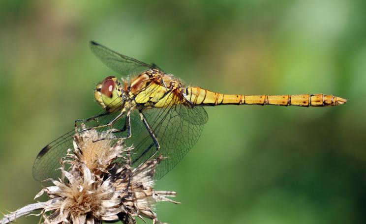 Scientists are debating declines in flying insects (c) Charlesjsharp