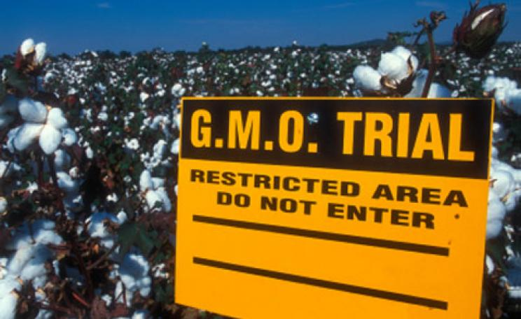 Trials of GM cotton in the USA