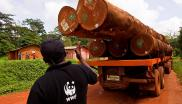 A man wearing a WWF shirt directs a logging truck