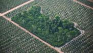 Deforestation to make way for oil palm plantation in Brazil