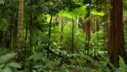 Peruvian rainforest