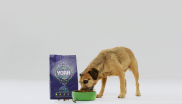Dog eating insect-based pet food
