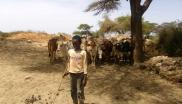 A young pastoralist with cattle
