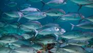 fish in a marine protected area