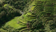 The Banaue rice terraces in the Philippines have been declared free of all genetically modified orgaisms (GMOs). Photo: Agricmarketing at en.wikipedia.org.