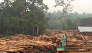 Log yard operated by plantation company PT Kahayan, October 2014. Photo: EIA.