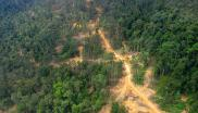 Logging road in East Kalimantan: logged forest on the left, primary forest on the right. Photo: Wakx via Wikimedia Commons (CC BY-SA 2.0)