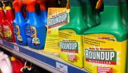 Monsanto's Roundup flagons on sale - relabelled by activists from Global Justice Now, 28th April 2016. The main active ingredient is glyphosate. Photo: Global Justice Now via Flickr (CC BY).